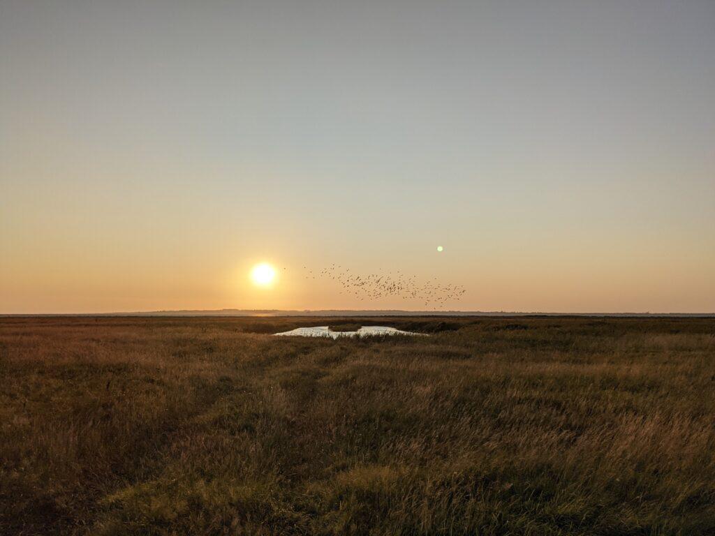 Solnedgang og krikænder